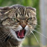 Матёрый кот