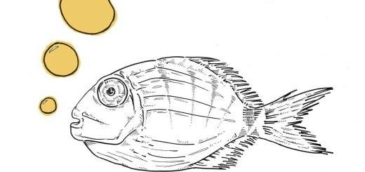 Какую рыбу ловить